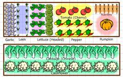 Plan Your Perfect Garden Online Garden Layout Software