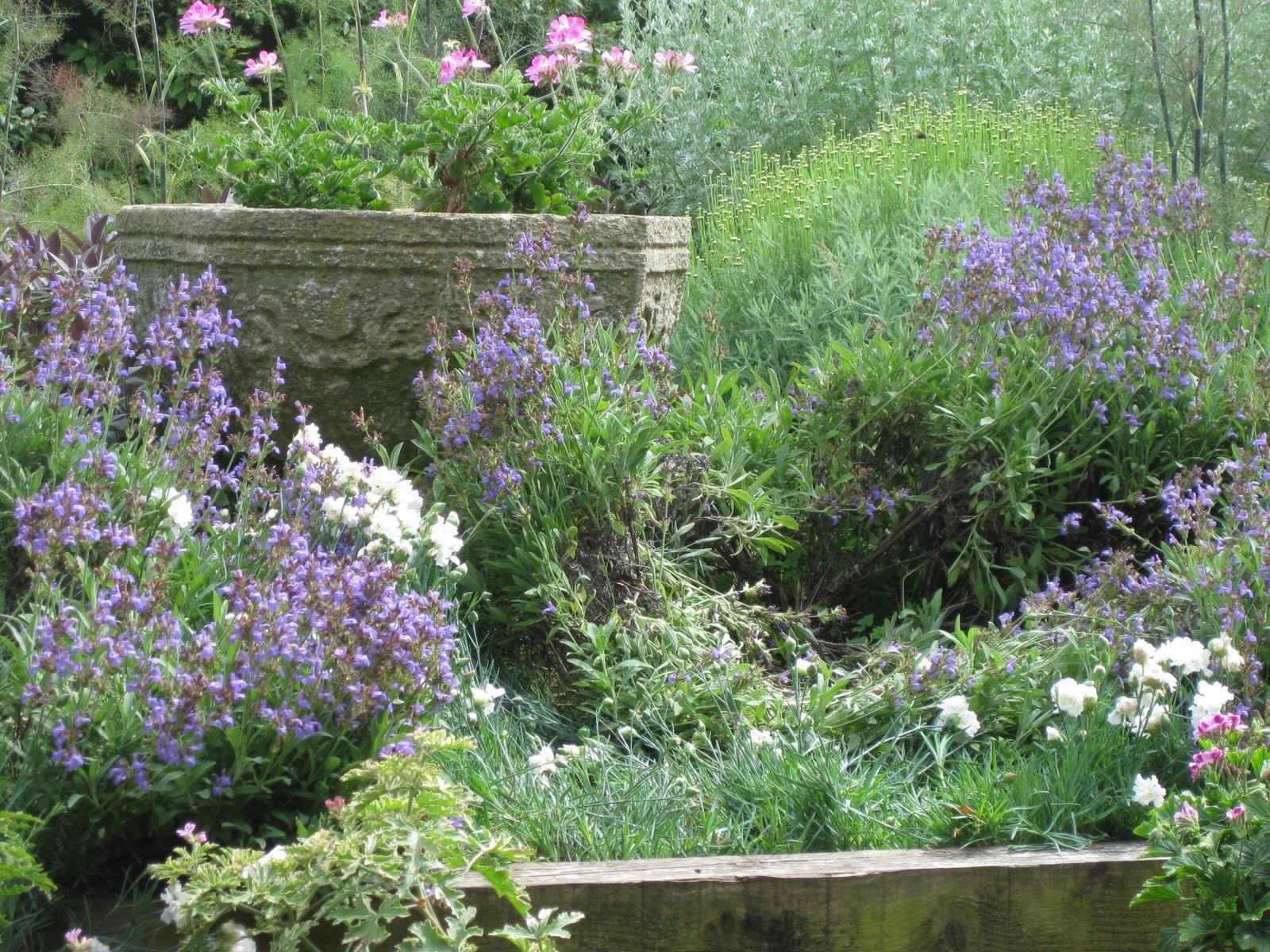 Lovely Horticulture Talk!   WordPress.com