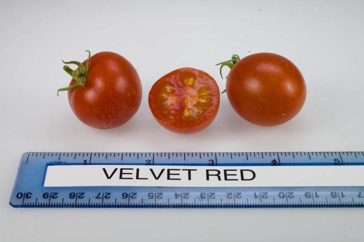 Velvet_Red